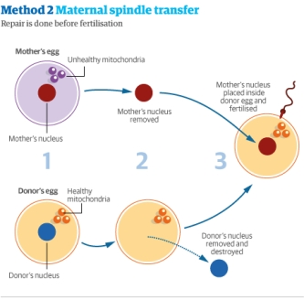 Retrieved from http://www.theguardian.com/science/2013/jun/28/uk-government-ivf-dna-three-people